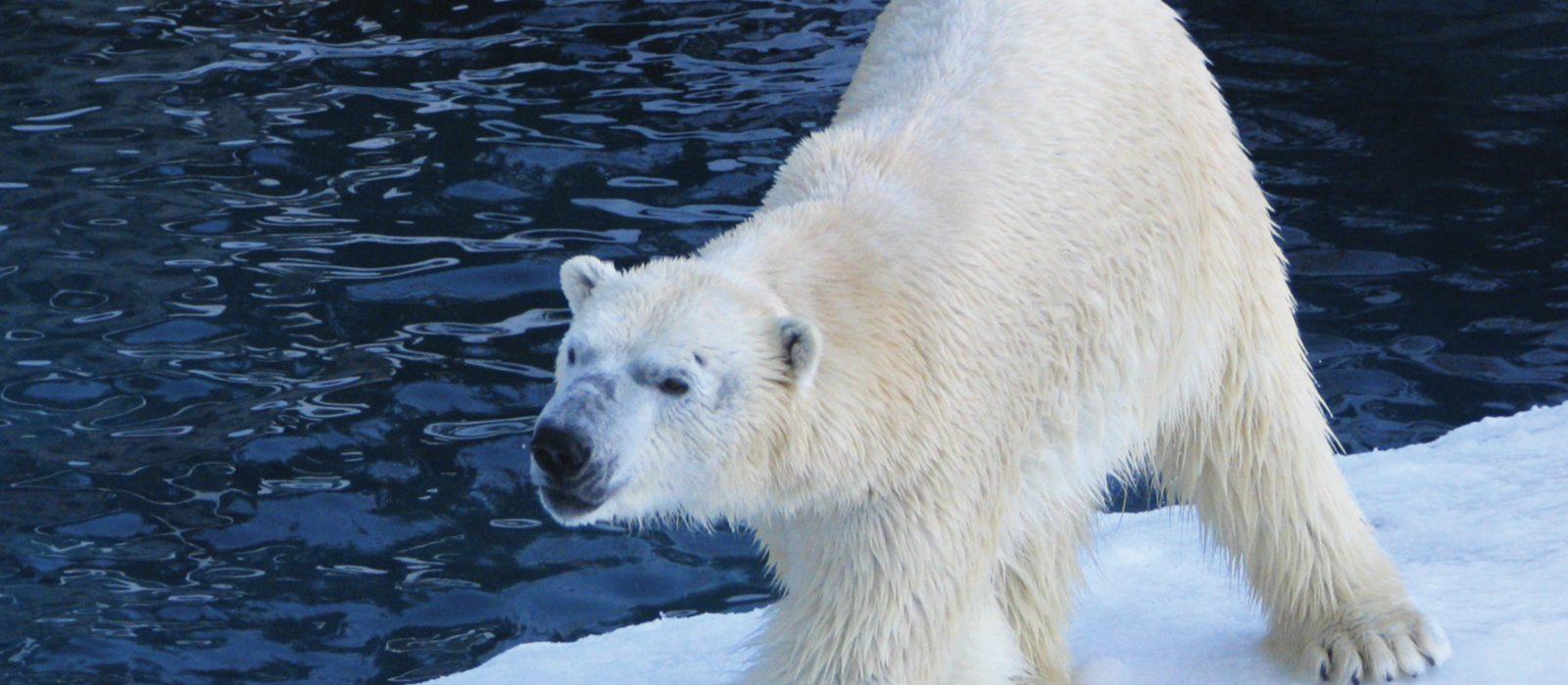 7-commandements-hiver-quebecois-geant-zoo-saint-felicien-saguenay-lac-saint-jean-quebec-le-mag