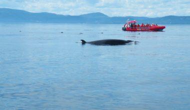 croisiere-essipit-baleine-cote-nord-quebec-le-mag