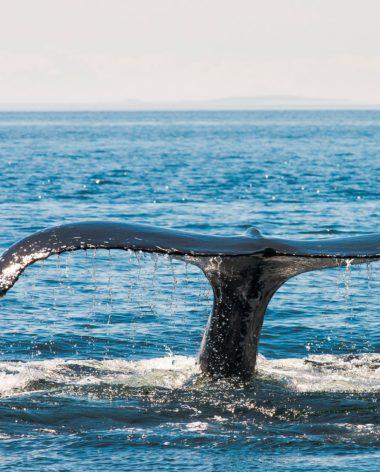 experience-zodiak-baleine-quebec-le-mag