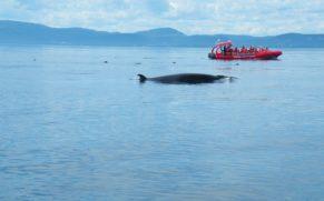 cote-nord-baleine-croisiere-essipit-quebec-le-mag