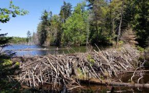 amishk-aventure-autochtone-hebergement-barrage-quebec-le-mag