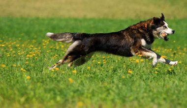 kinadapt-chien-lanaudiere-balade-chien-quebec-le-mag