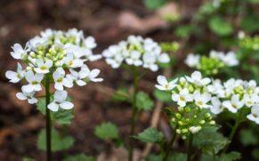 jardins-de-metis-gaspesie-fleur-quebec-le-mag