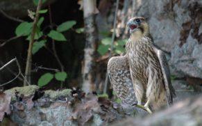 parc-national-aiguebelle-juvenile-oiseau-quebec-le-mag