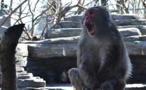zoo-de-granby-cantons-de-lest-macaque-japonais-quebec-le-mag