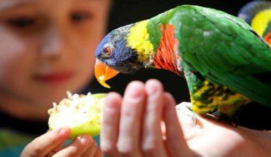 zoo-de-granby-cantons-de-lest-perroquet-quebec-le-mag