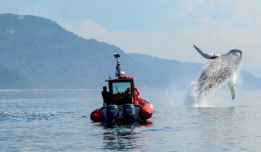 experience-observation-de-la-faune-baleine-quebec-le-mag