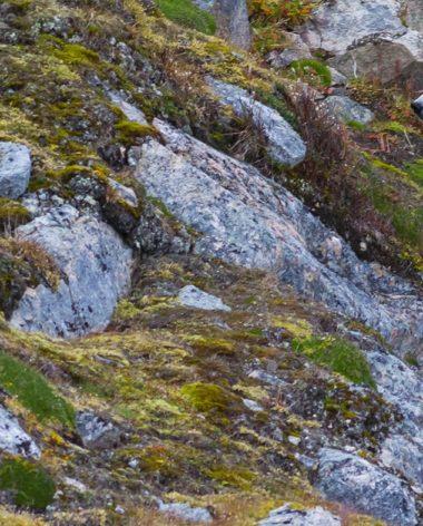 ours-polaire-nunavik-animal-quebec-quebec-le-mag