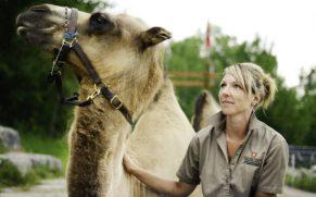 zoo-sauvage-saint-felicien-saguenay-lac-saint-jean-animaux-observation-chameau-quebec-le-mag