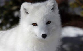 zoo-sauvage-saint-felicien-saguenay-lac-saint-jean-animaux-observation-loup-arctique-quebec-le-mag