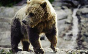 zoo-sauvage-saint-felicien-saguenay-lac-saint-jean-animaux-observation-ours-brun-quebec-le-mag
