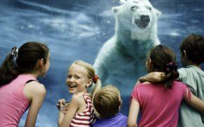 zoo-sauvage-saint-felicien-saguenay-lac-saint-jean-animaux-observation-ours-blanc-quebec-le-mag