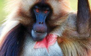 zoo-sauvage-saint-felicien-saguenay-lac-saint-jean-animaux-observation-gelada-quebec-le-mag