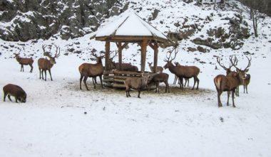 parc-omega-en-hiver-cerrfs-quebec-le-mag