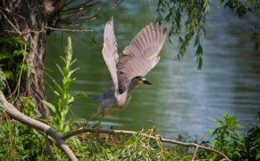 oiseau-parc-national-iles-de-boucherville-longueuil-quebec-le-mag