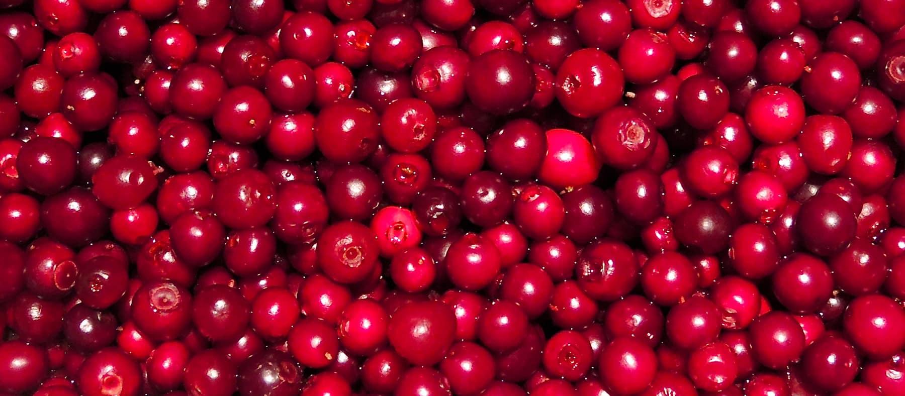 petits-fruits-nunanik-airelles-quebec-le-mag