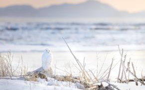 parc-national-du-bic-harfang-des-neiges-hiver-bas-saint-laurent-quebec-le-mag