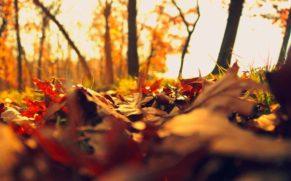 automne-association-des-pourvoiries-de-lanaudiere-quebec-le-mag