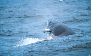 balade-baleines-croisiere-aml-cote-nord-quebec-le-mag