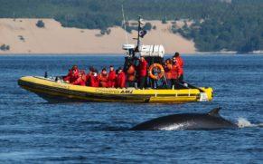 baleine-croisiere-aml-cote-nord-quebec-le-mag