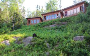 observation-ours-noir-ete-okwari-aventure-quebec-le-mag