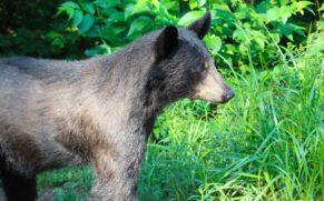 okwari-aventure-ours-noir-saguenay-lac-saint-jean-quebec-le-mag