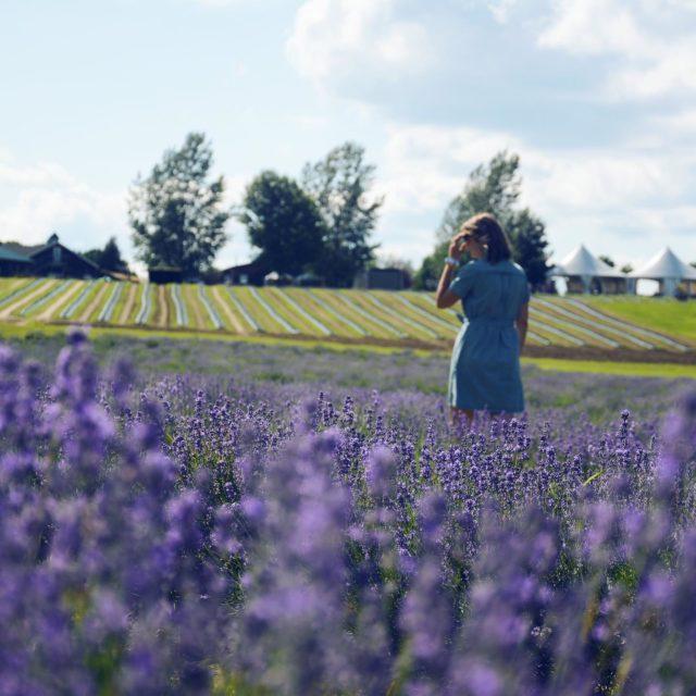 Non, nous ne sommes pas en Provence mais bien au Québec chez @maisonlavande 💜 📸 - @ilsebaladait • • • #quebeclemag #quebec #qc #lavande #maisonlavande #nature #naturephotography #explorequebec #outdoors #flower #lavander #explorecanada #travel #travelgram #onatousbesoinduquebec