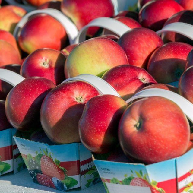 C'est la saison de l'autocueillette de pommes du Québec ! 🍎 La pomme Lobo, croquante et acide, la célèbre McIntosh au jus abondant et sucré ou encore la pomme Cortland à la chair très blanche... Autant de choix pour une pause gourmande ! Quelques adresses de cueillette :  @cidrelacroix : 📍Saint-Joseph-du-Lac @labontedelapomme : 📍Oka @polycultureplante : 📍Île d'Orléans  Bonne récolte !  📸 - @philippe.renault.photographie  . . . #quebeclemag #quebecregion #quebec #qc #cueillettedepommes #pommes #apple #produitduterroir #produitlocal #vergers #achatlocal #pommeduquebec  #organic #applepicking #fresh #nature #automne #fall #fallvibes #autocueillette #fruits #enjoyquebec #enjoycanada #instafood #foodlife #foodporn